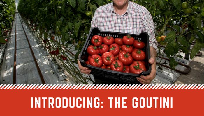 Goutini tomato