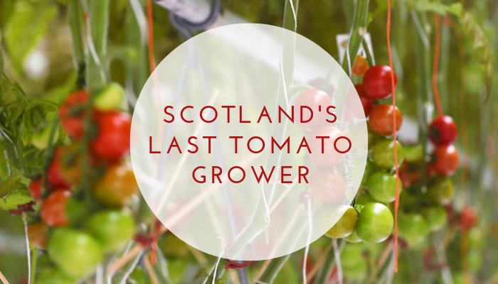 Scotland's Last Tomato Grower